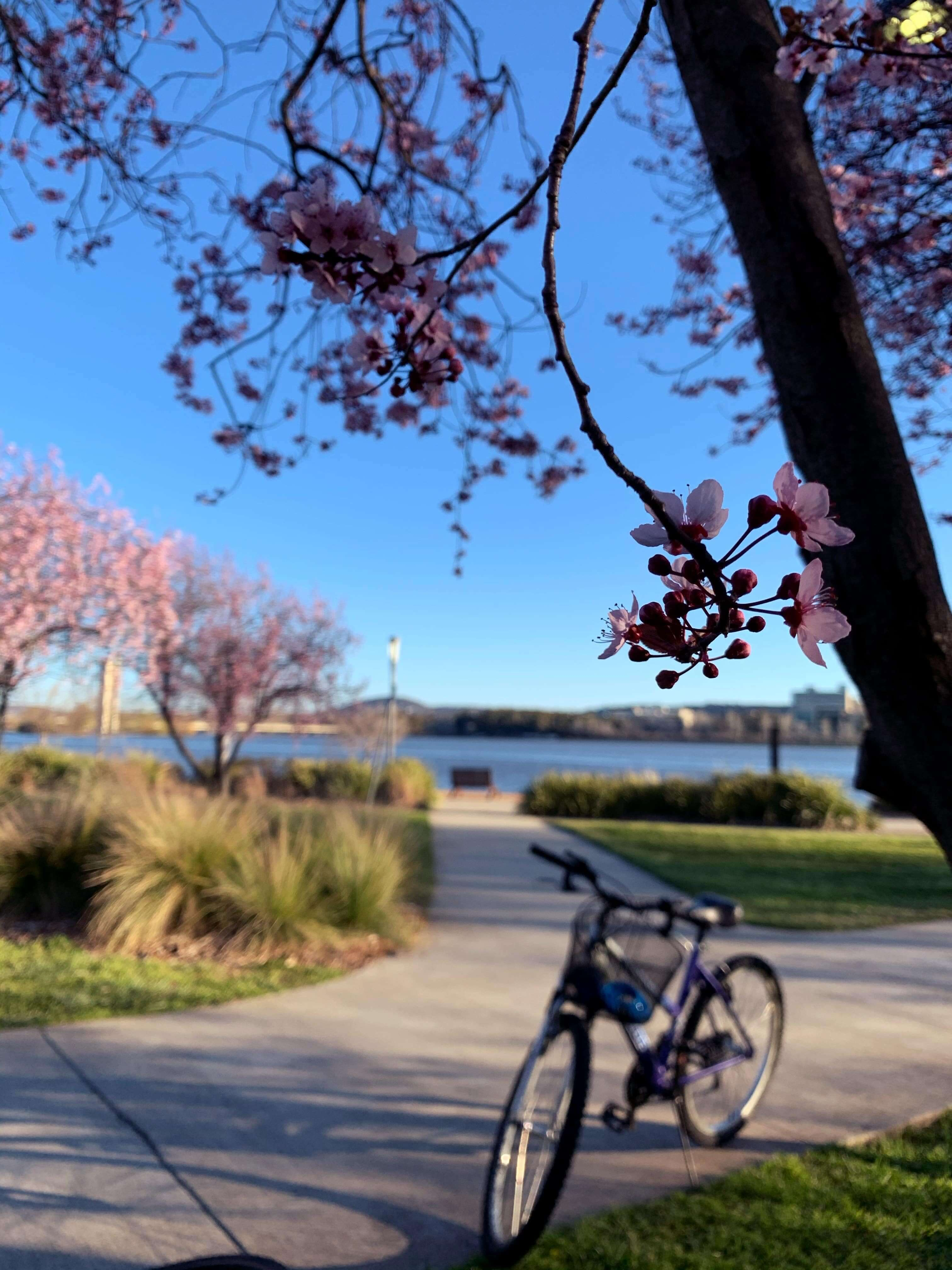 Lake Burly Griffin, Canberra