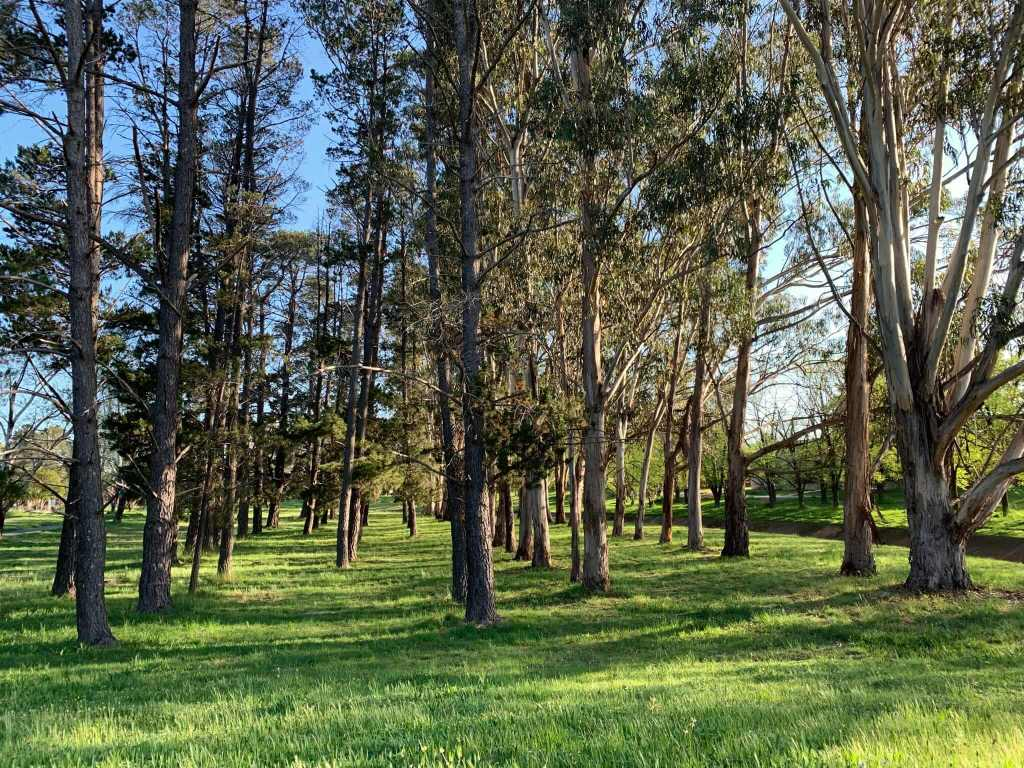 Trees thriving in Canberra's spring