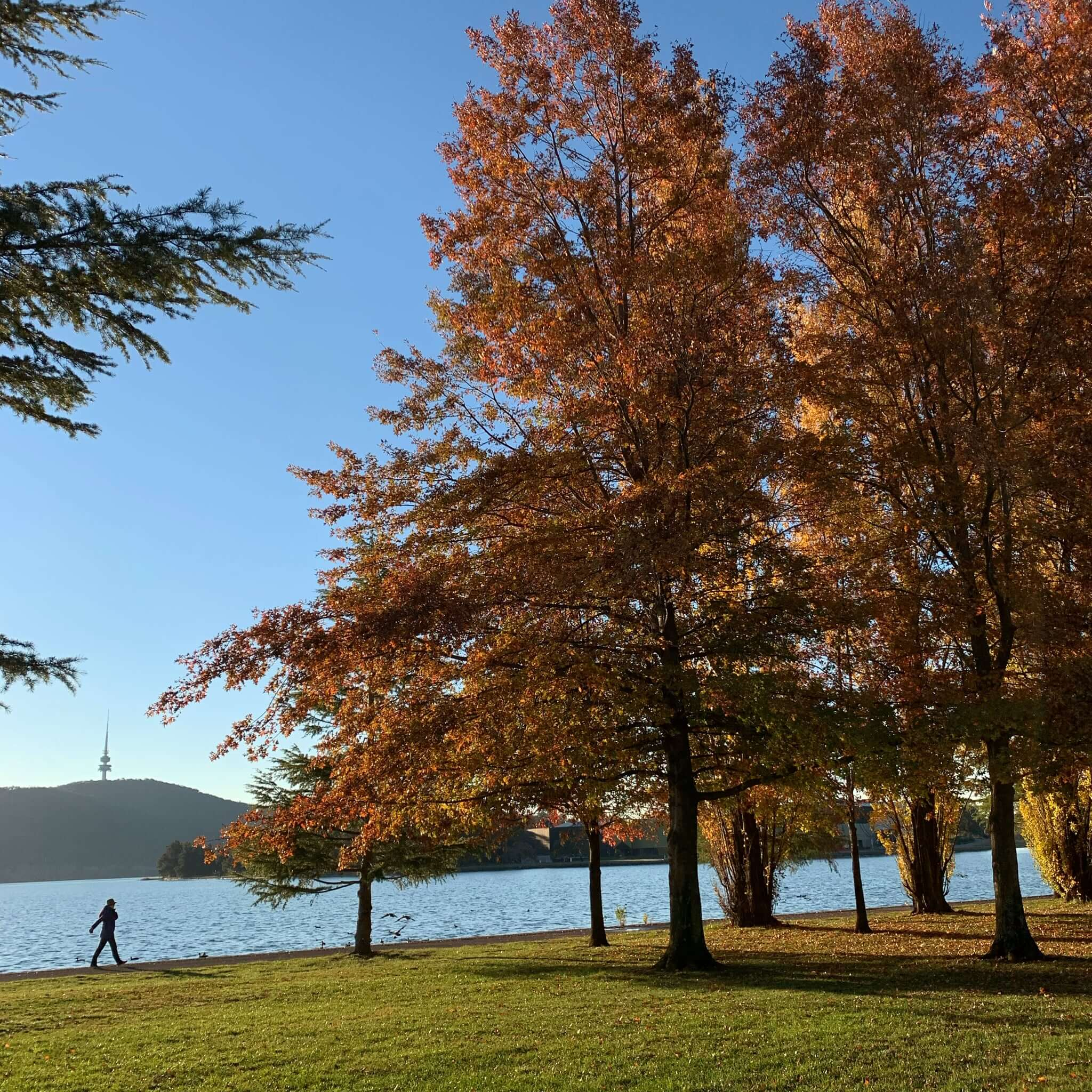 Lake Burley Griffin, Canberra on an autumn afternoon