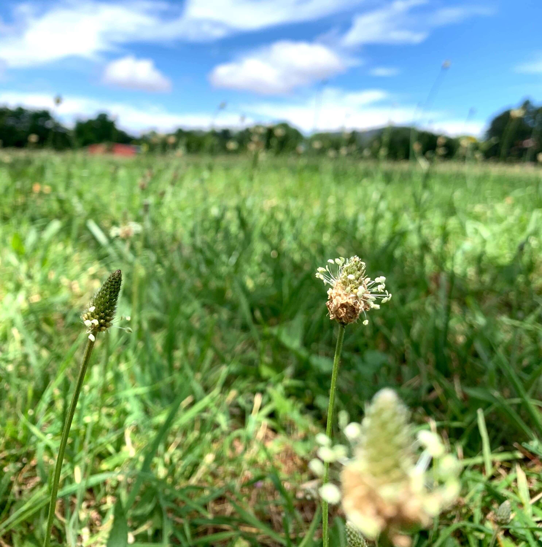 Grasslands, Canberra