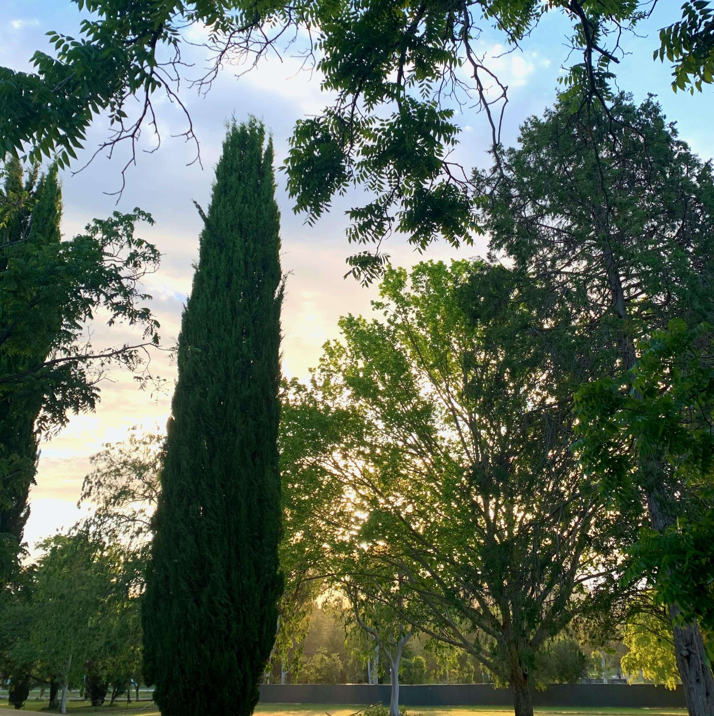 Morning sunshine through the trees, Canberra