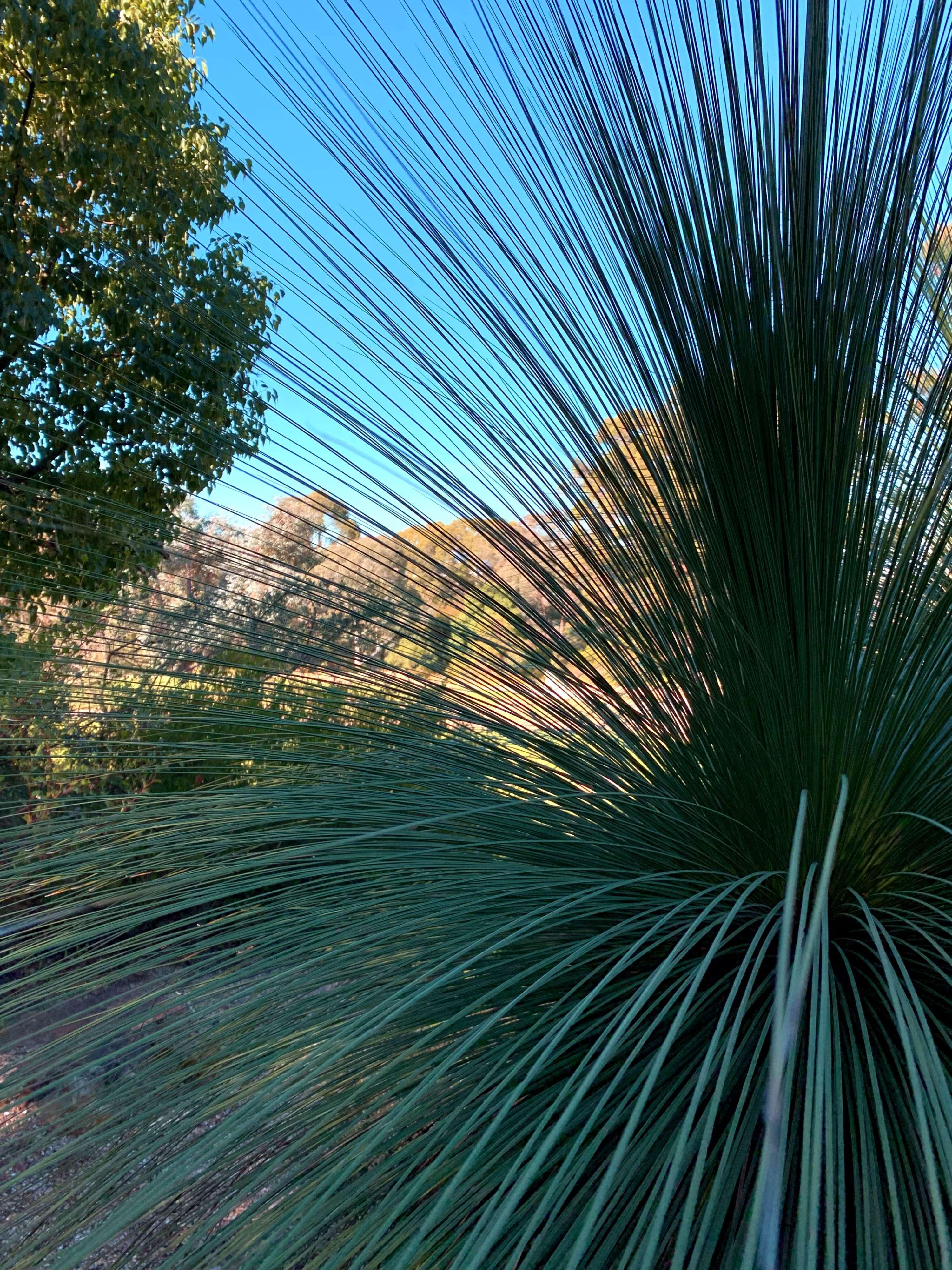 National Botanical Gardens, Canberra