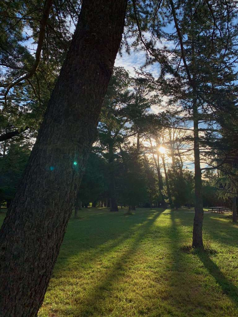 Sunset through the trees, Canberra