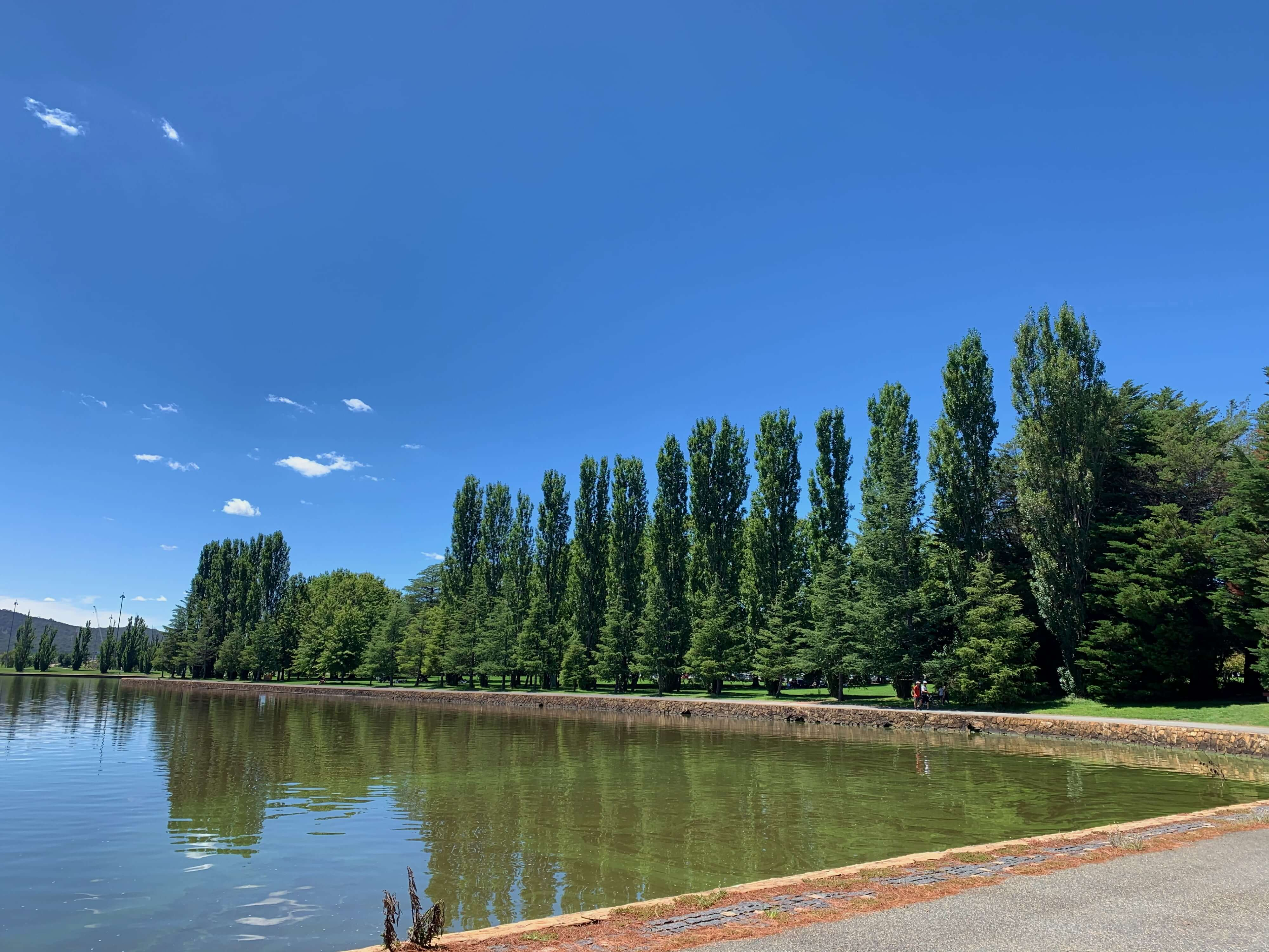 Trees lining the lakefront, Canberra