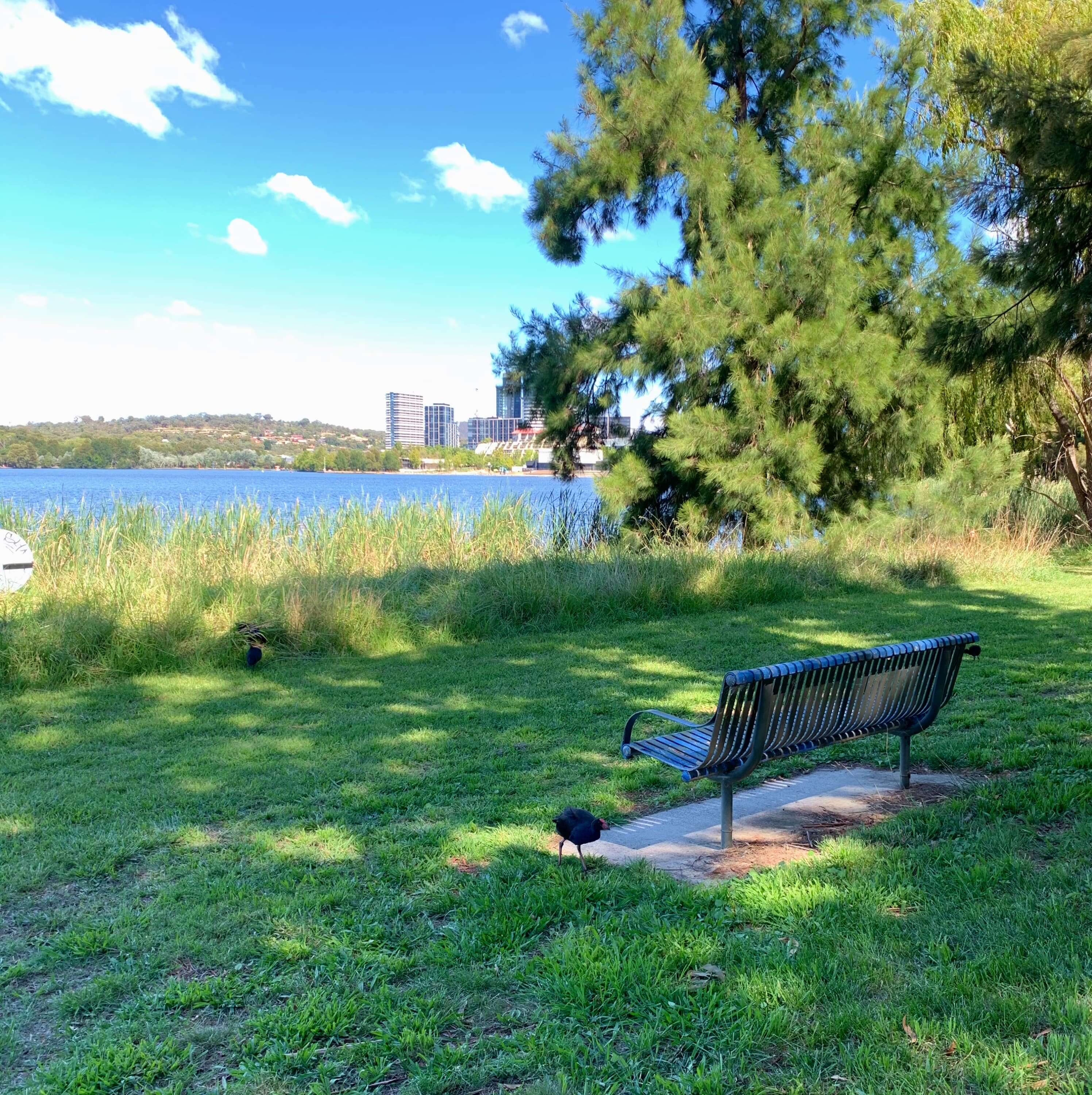 a bird and a single bench in the bikepath along Lake Ginninderra, Canberra
