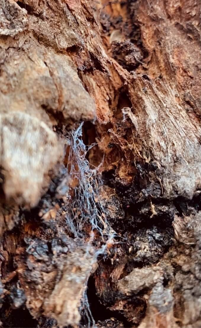 a small spider web in the cracks of a tree bark