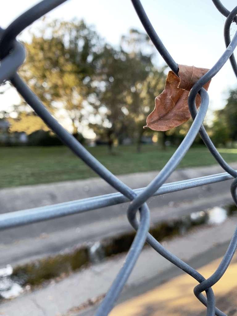brown autumn leaf stuck on chicken wire