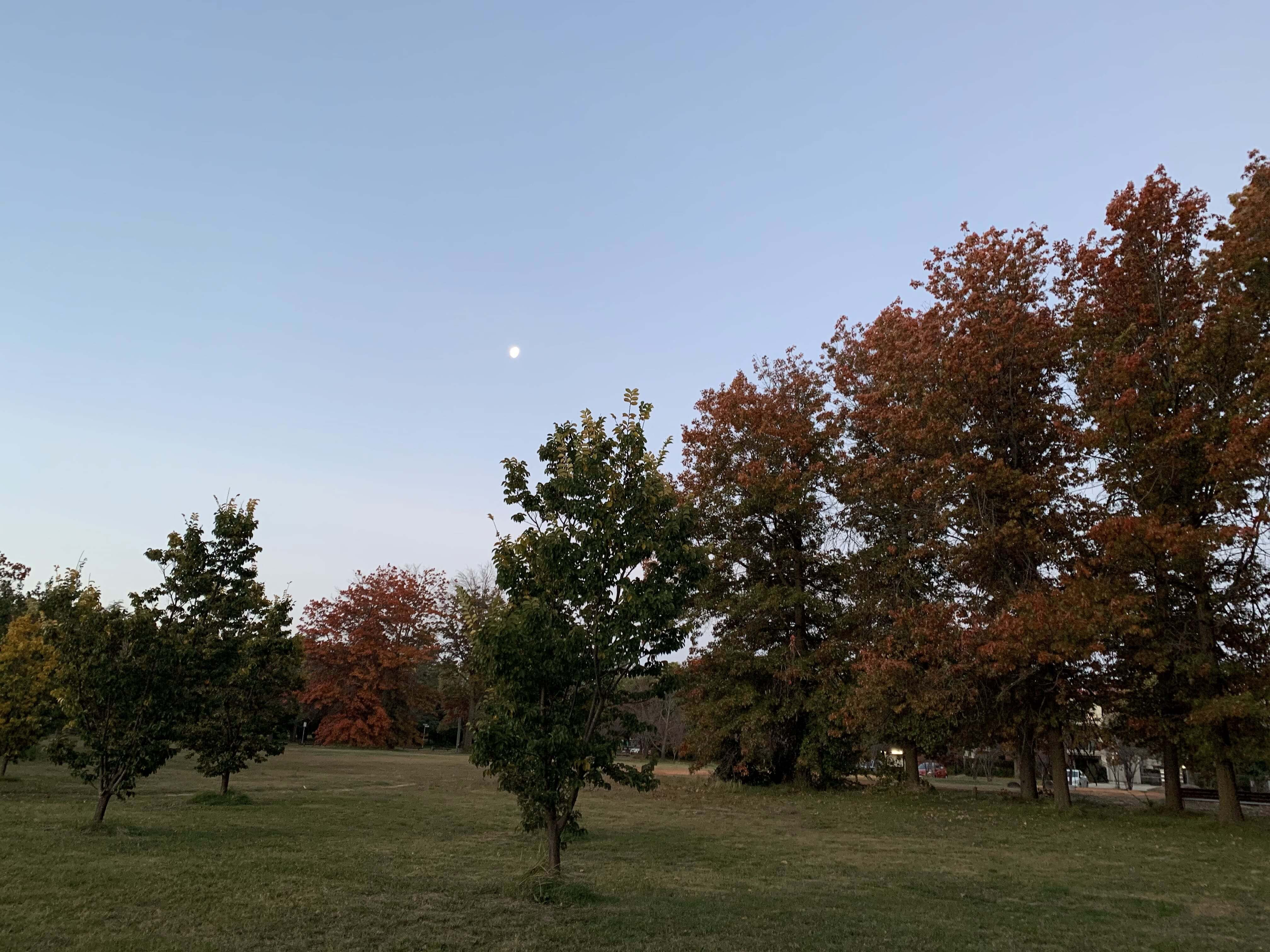 the moon and partly red, partly green autumn trees along the bike path
