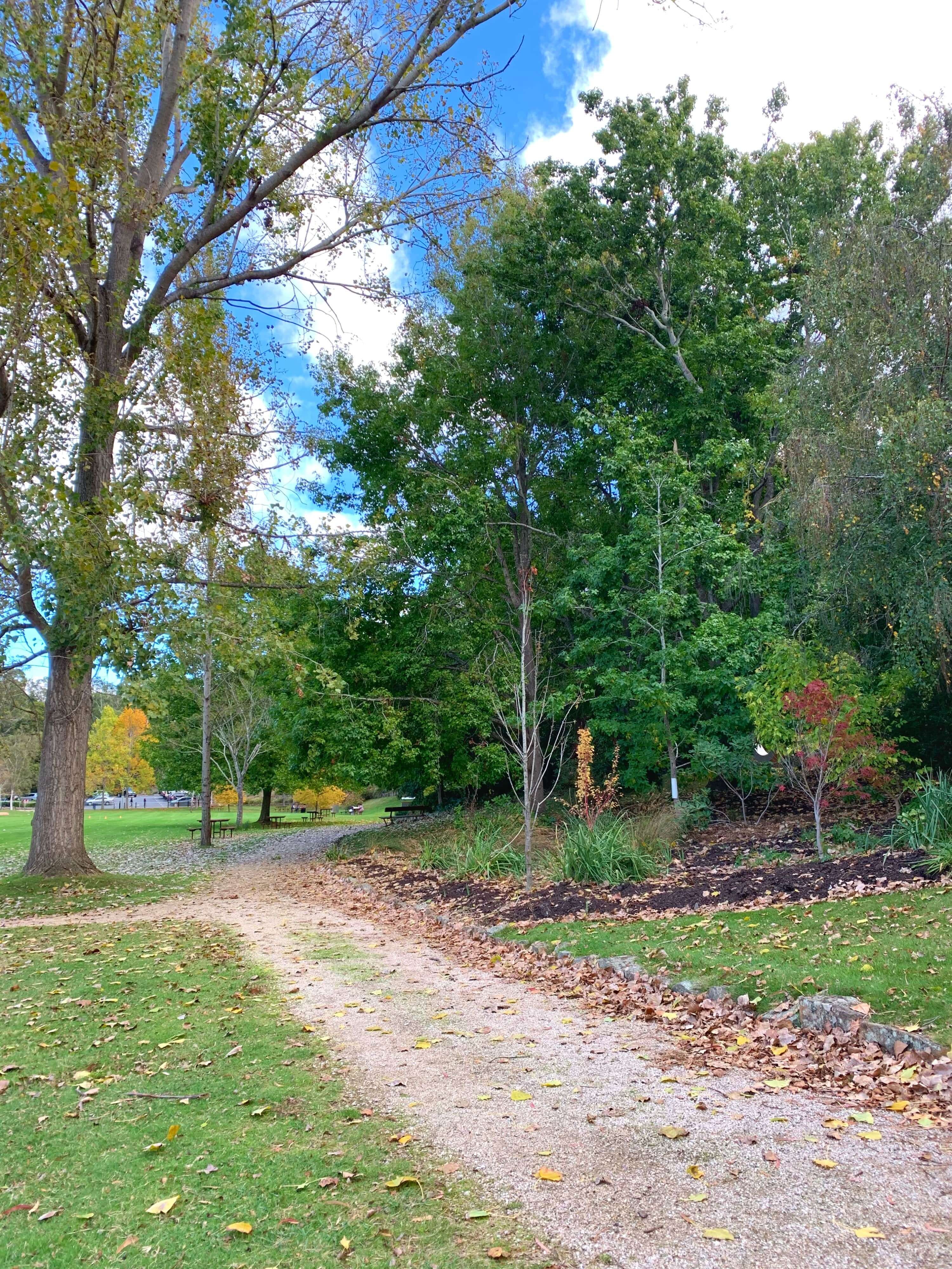 a footpath in a park, surrounded by green and early-autumn trees, Launceston, Tasmania