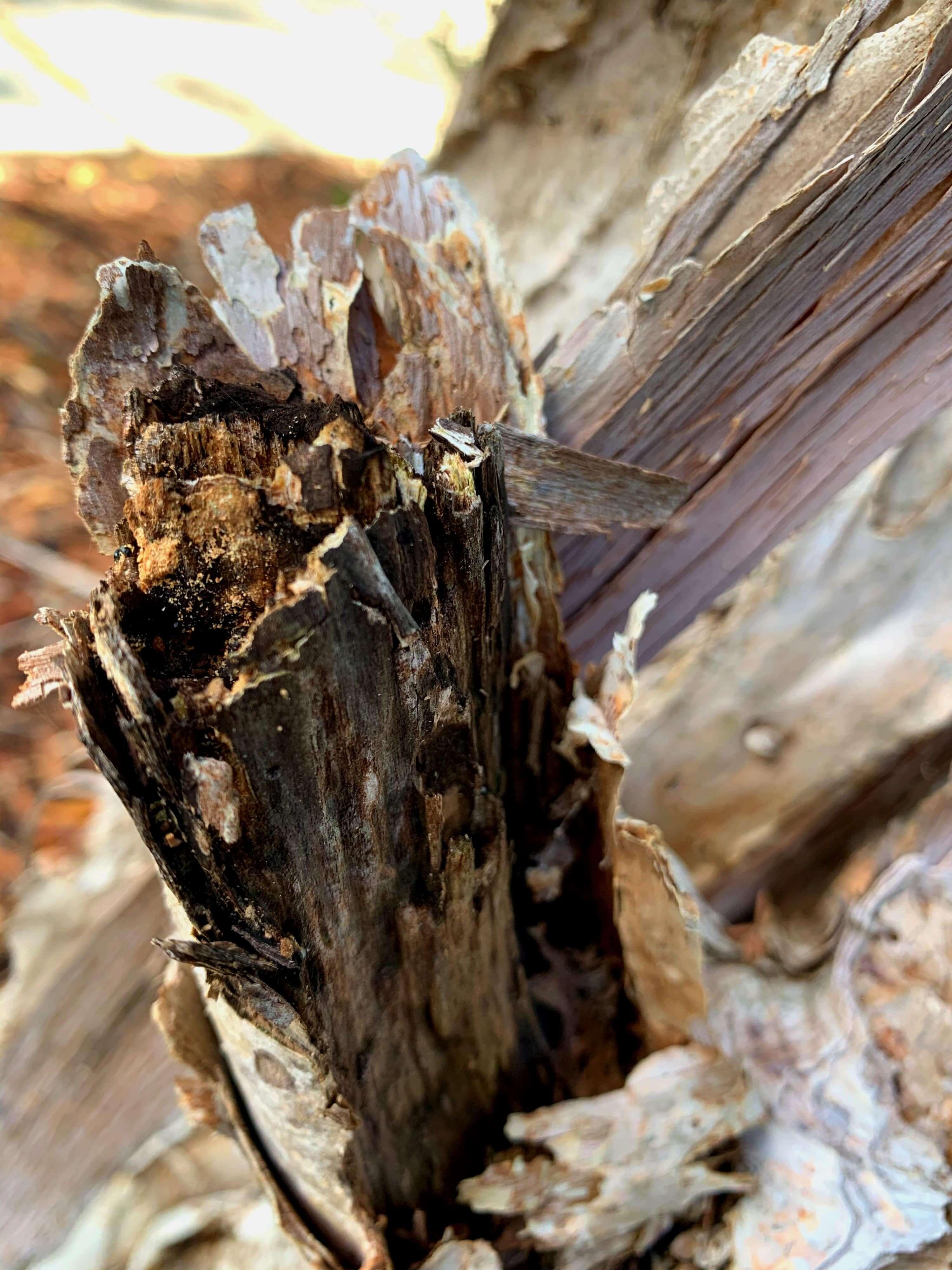 broken tree bark