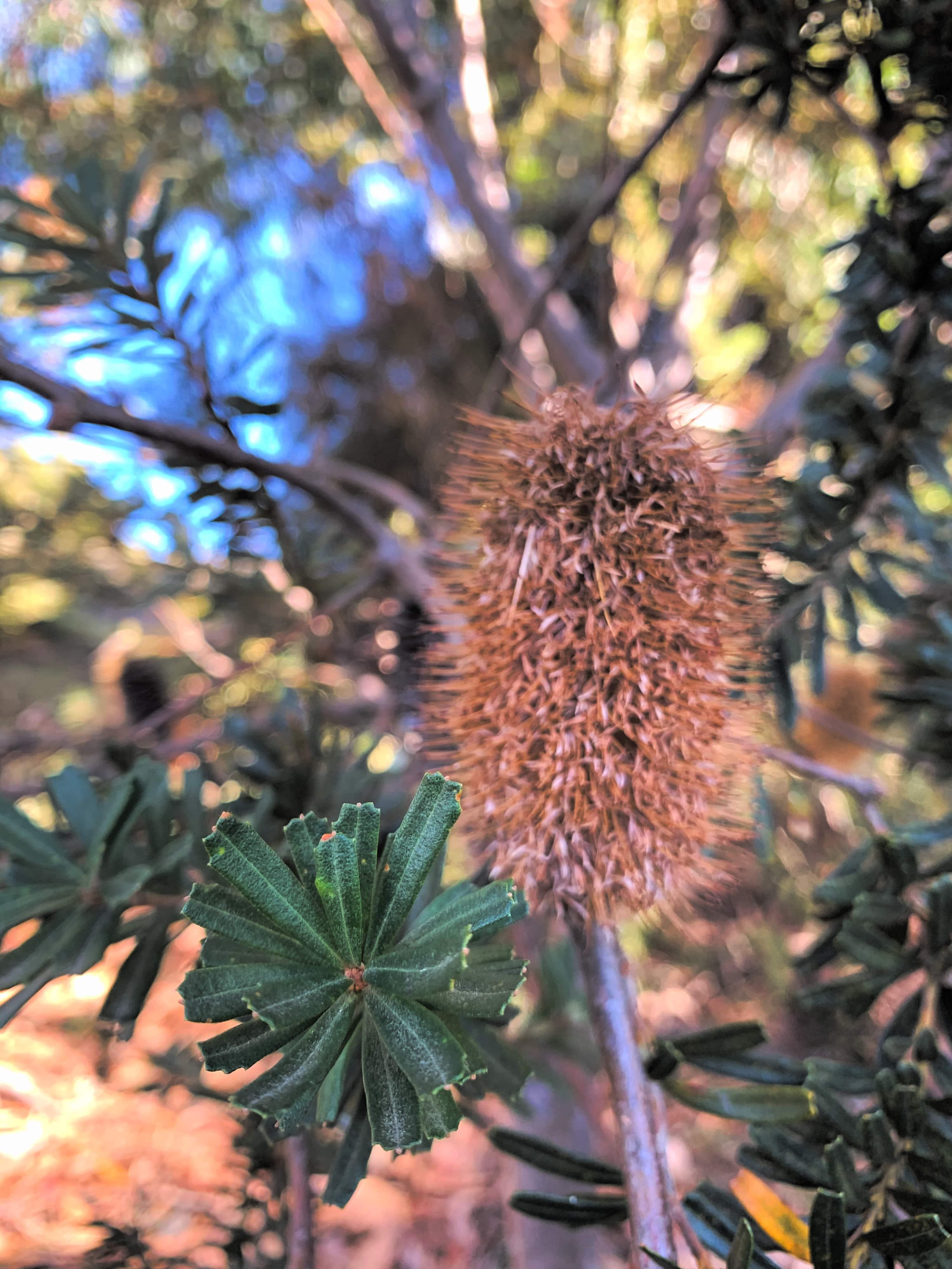 closeup photo of a bottlebrush and a fern