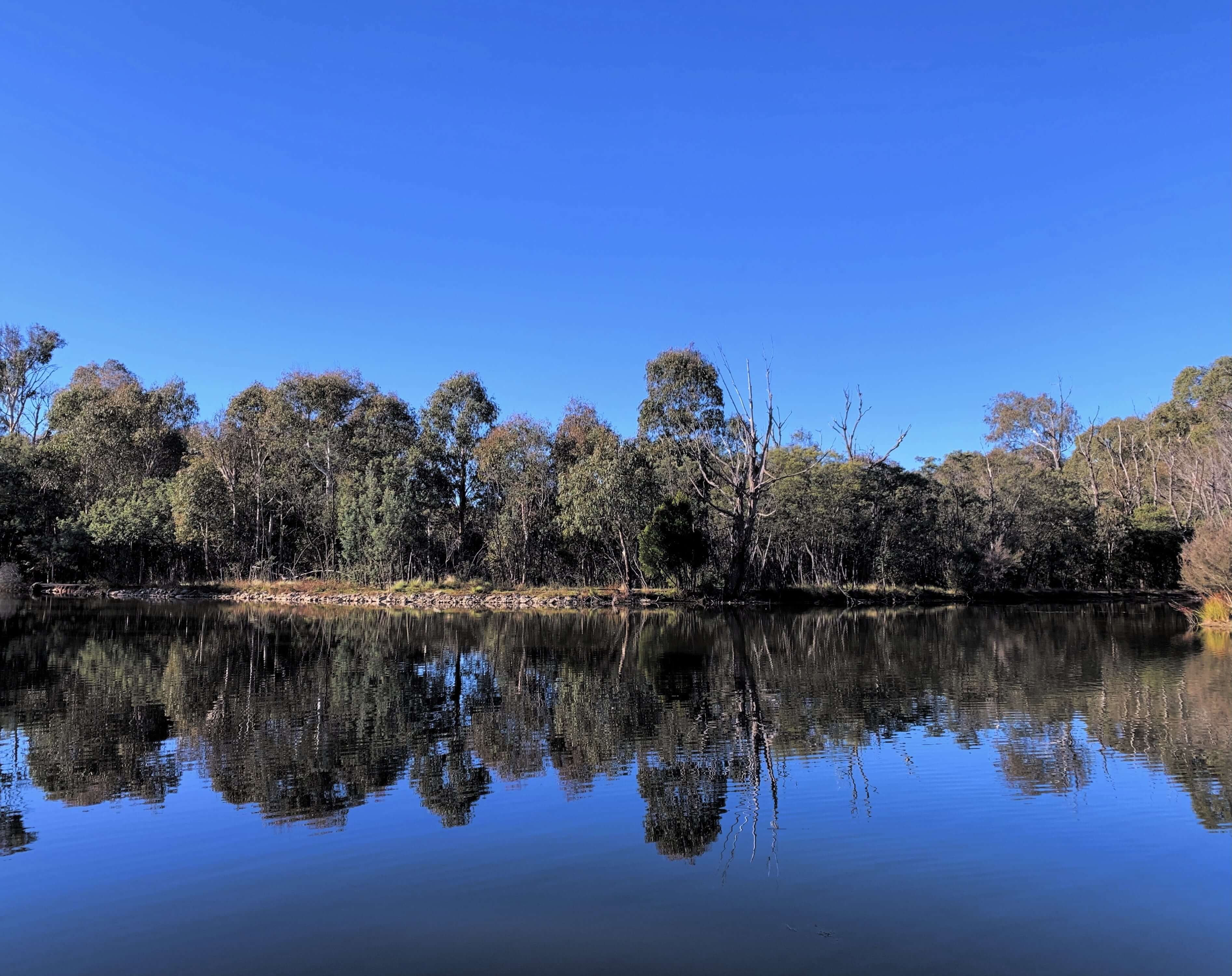 trees and bushes reflected on a lake, Tidbinbilla National park, Canberra