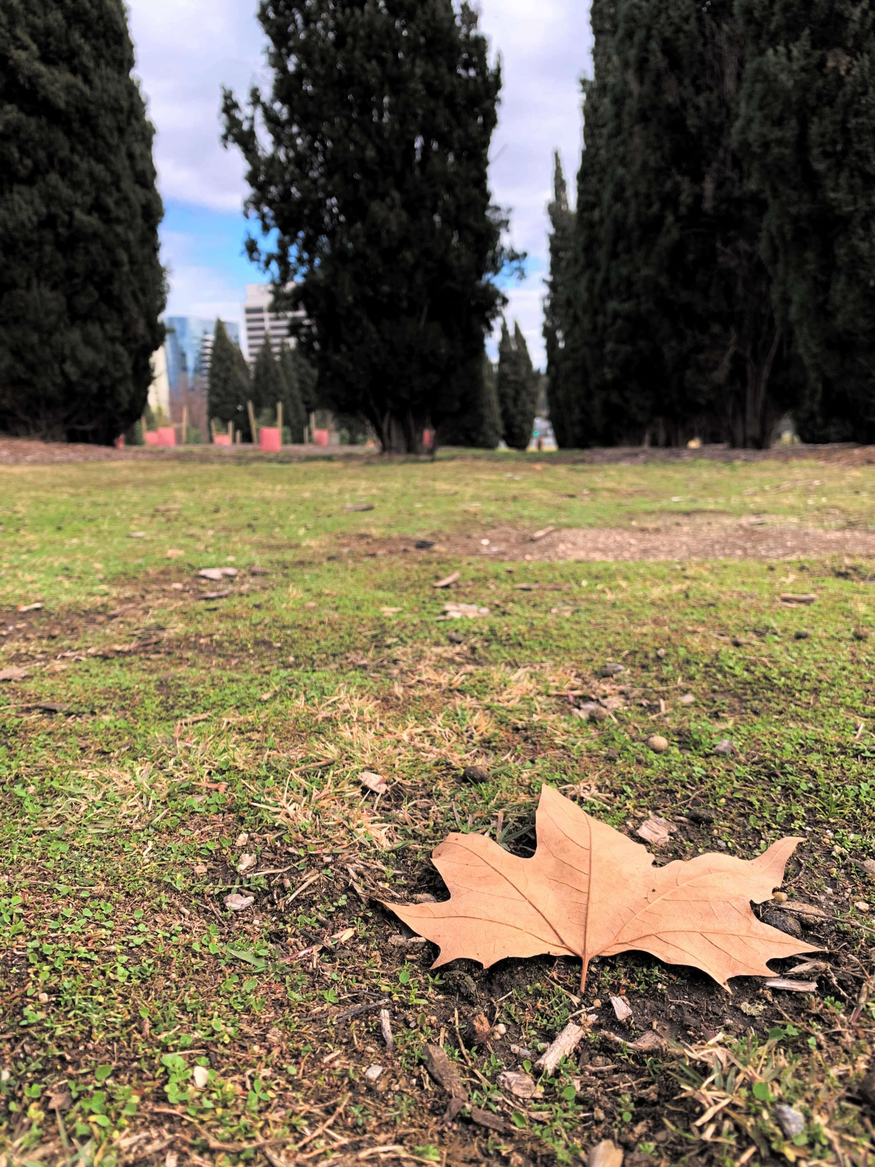 photo of a brown autumn leaf on the ground, taken on the second week of winter
