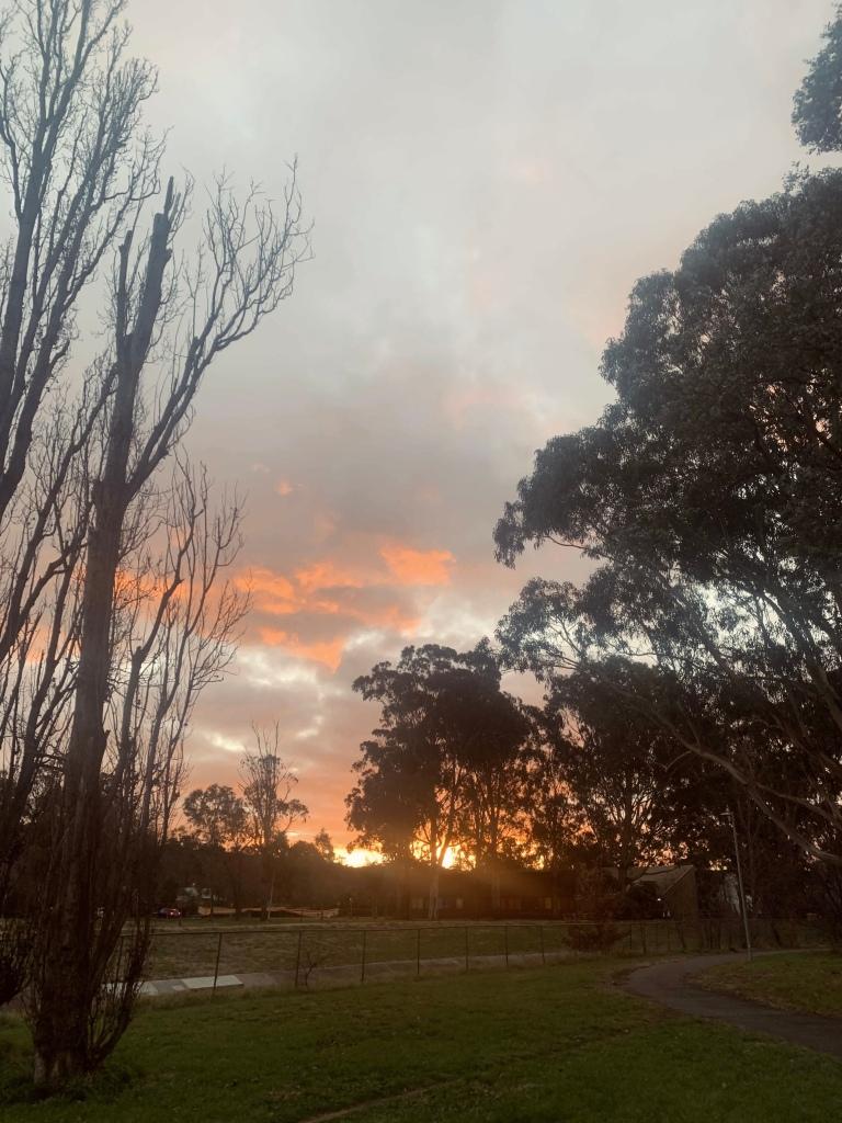Photo of the sun setting behind eucalyptus trees