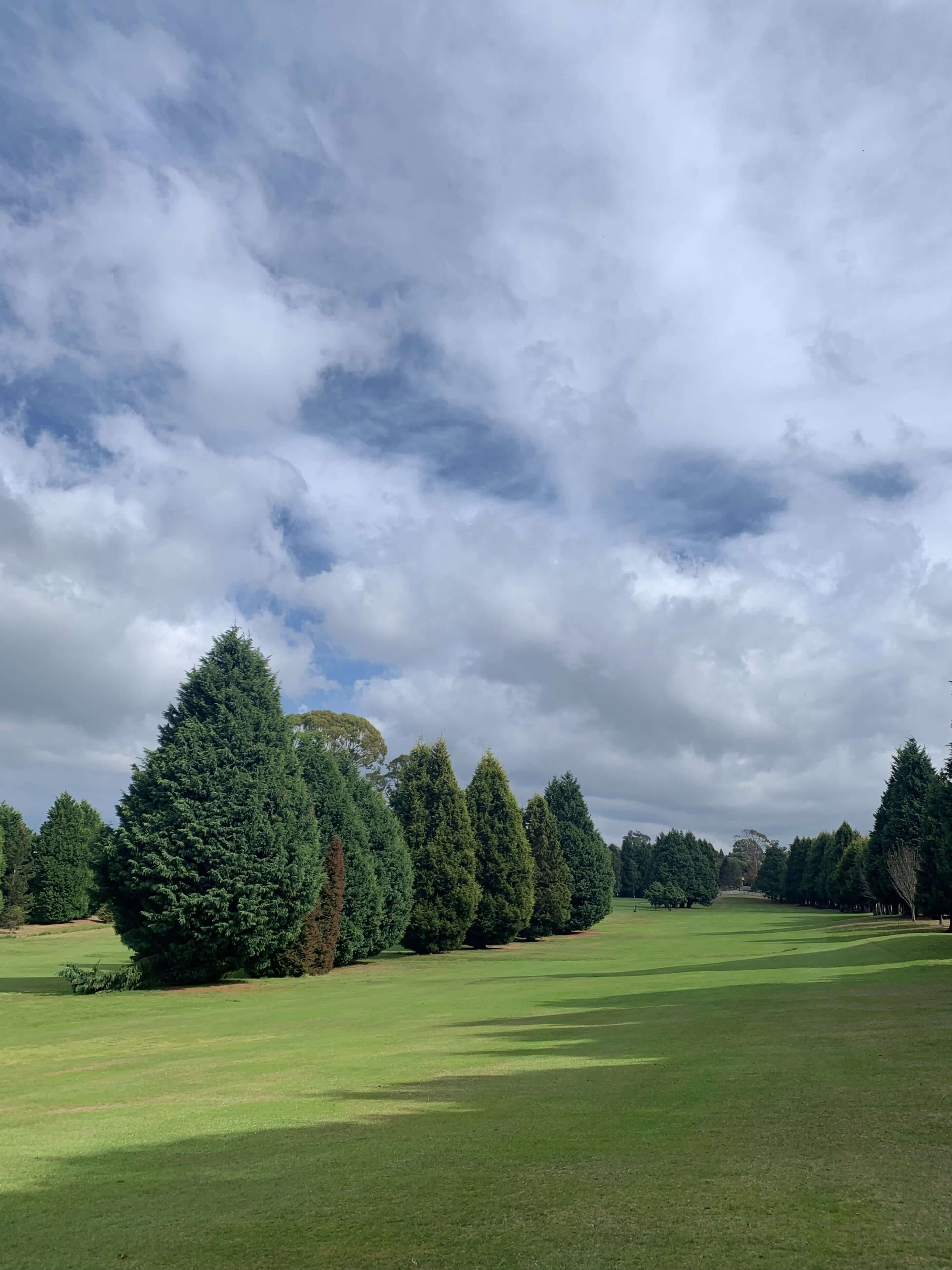 a lush golf court with a row of fern trees in the sun and shadows from nearby trees on the ground