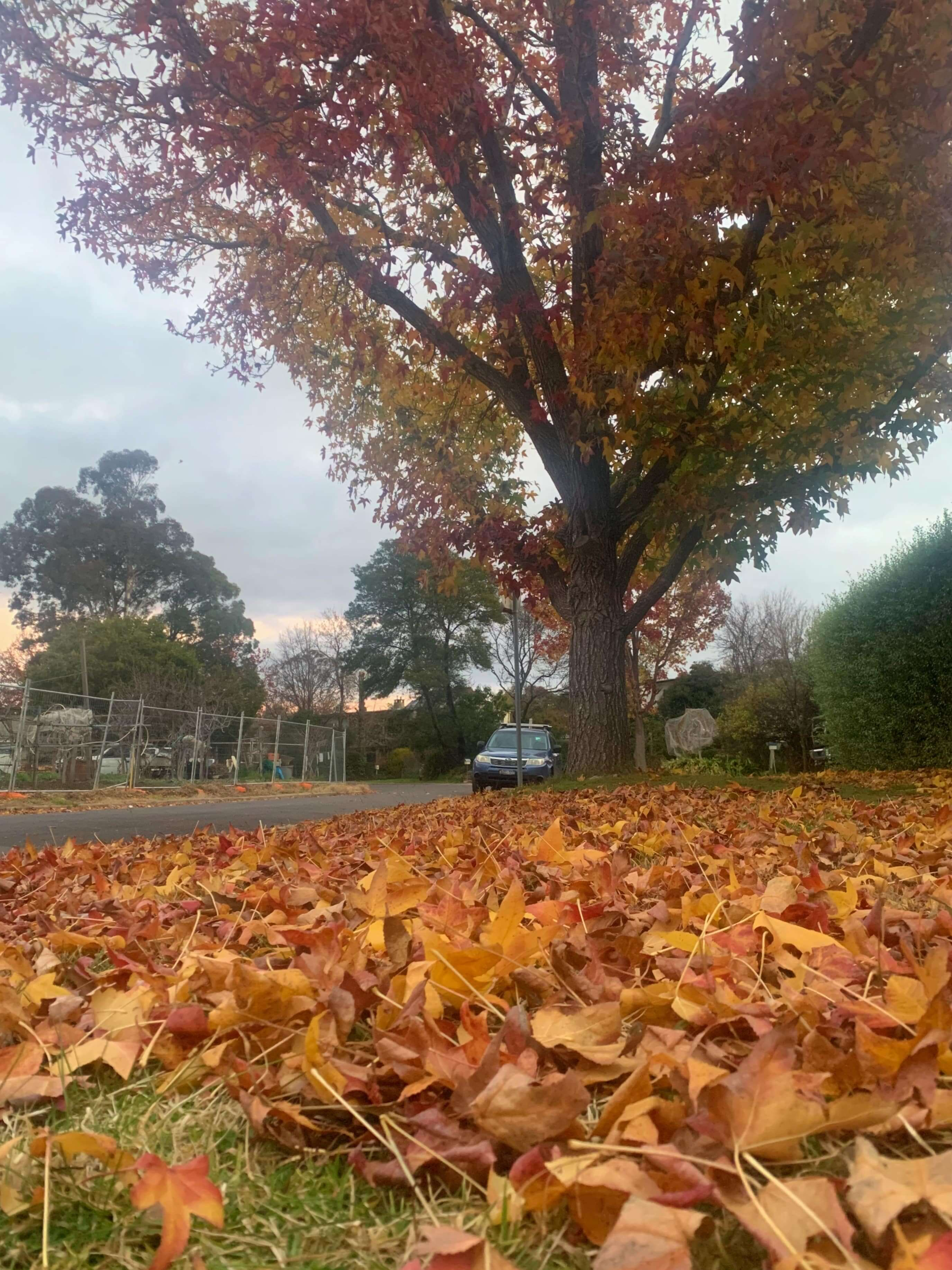 closeup photo of fallen autumn leaves with the tree in the background