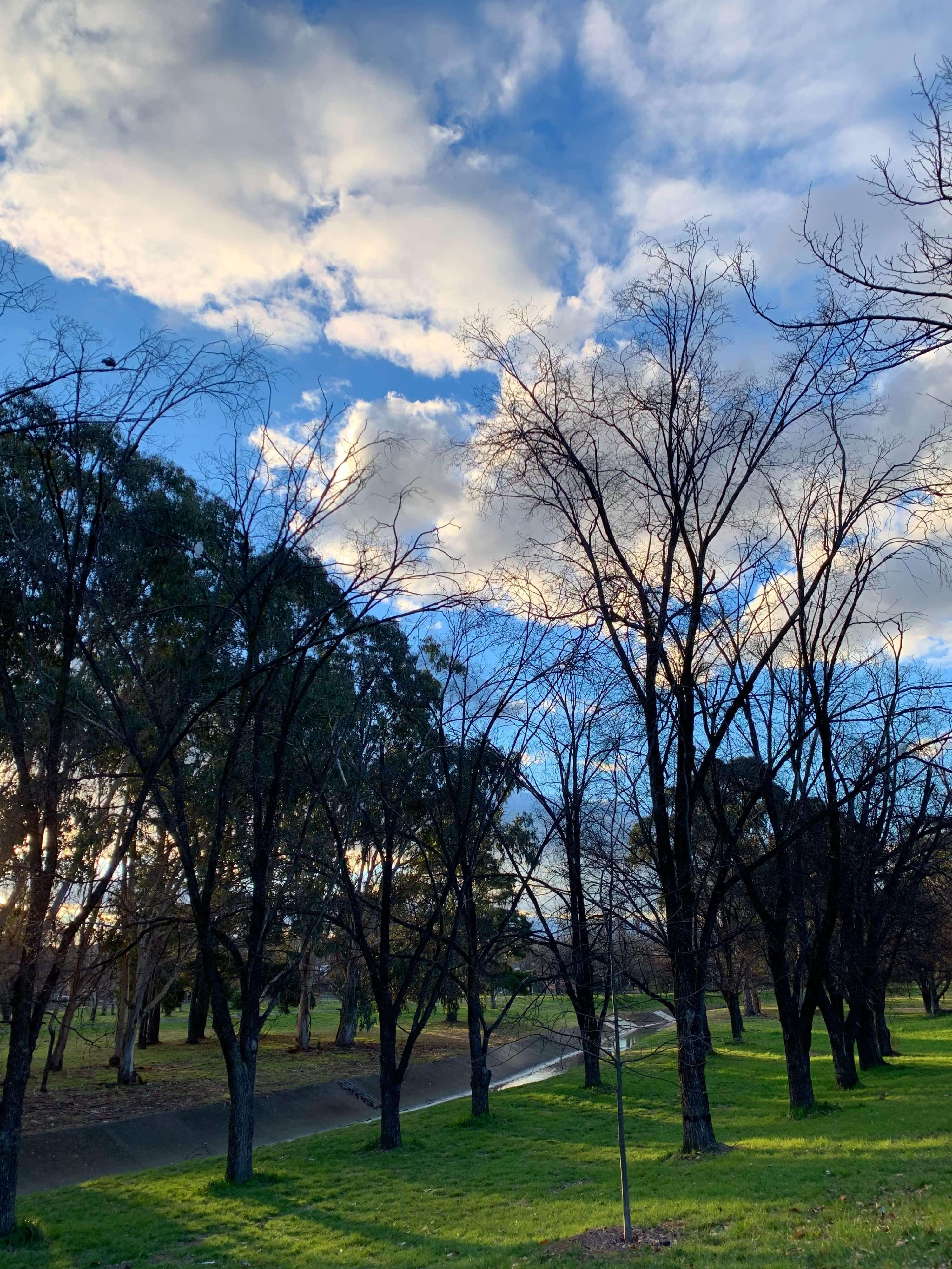 army of leafless trees along the footpath