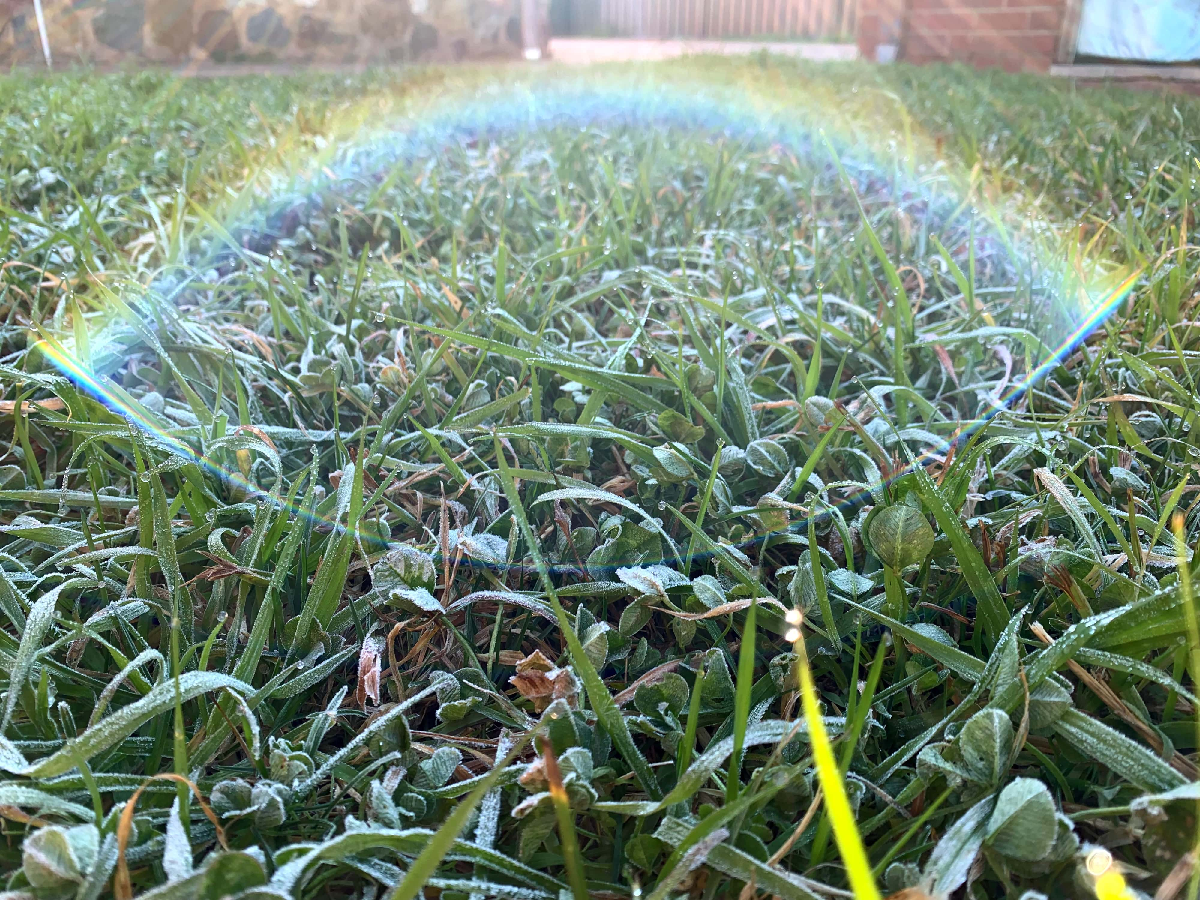 closeup photo of frost on the grass with the sunlight glinting in the camera's lens