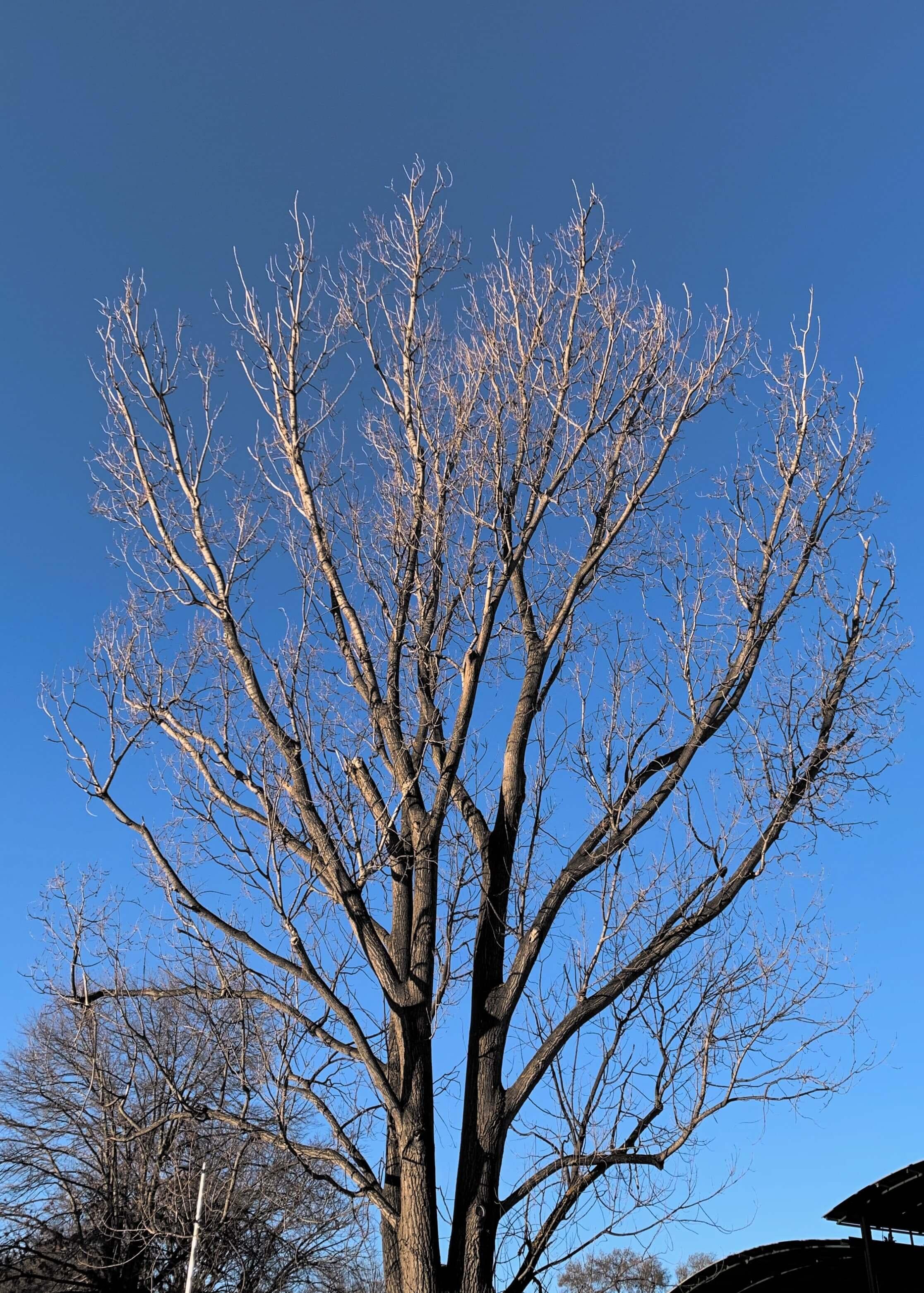 photo of a leafless tree's limbs