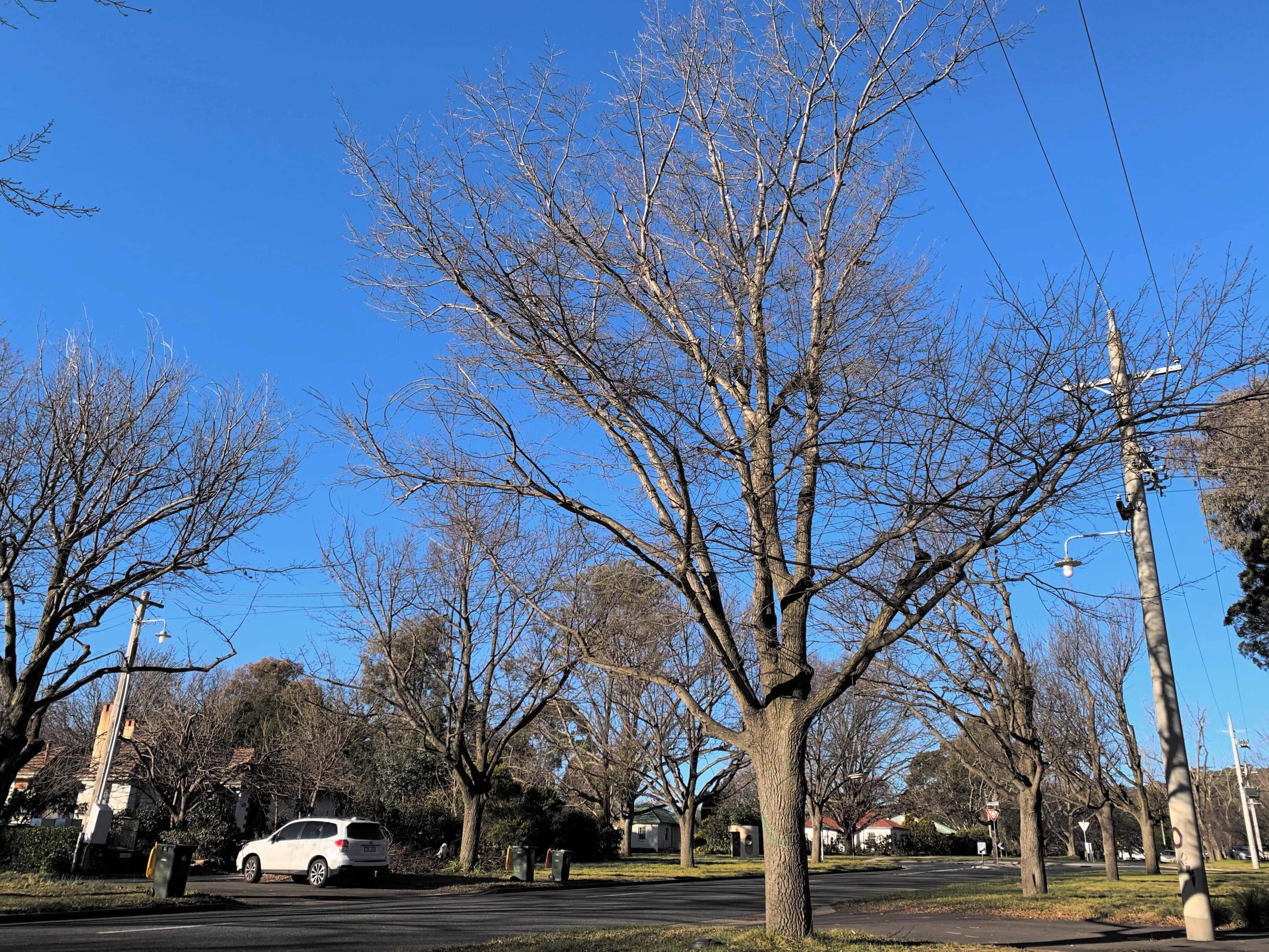 photo of a single, leafless tree on a sidewalk