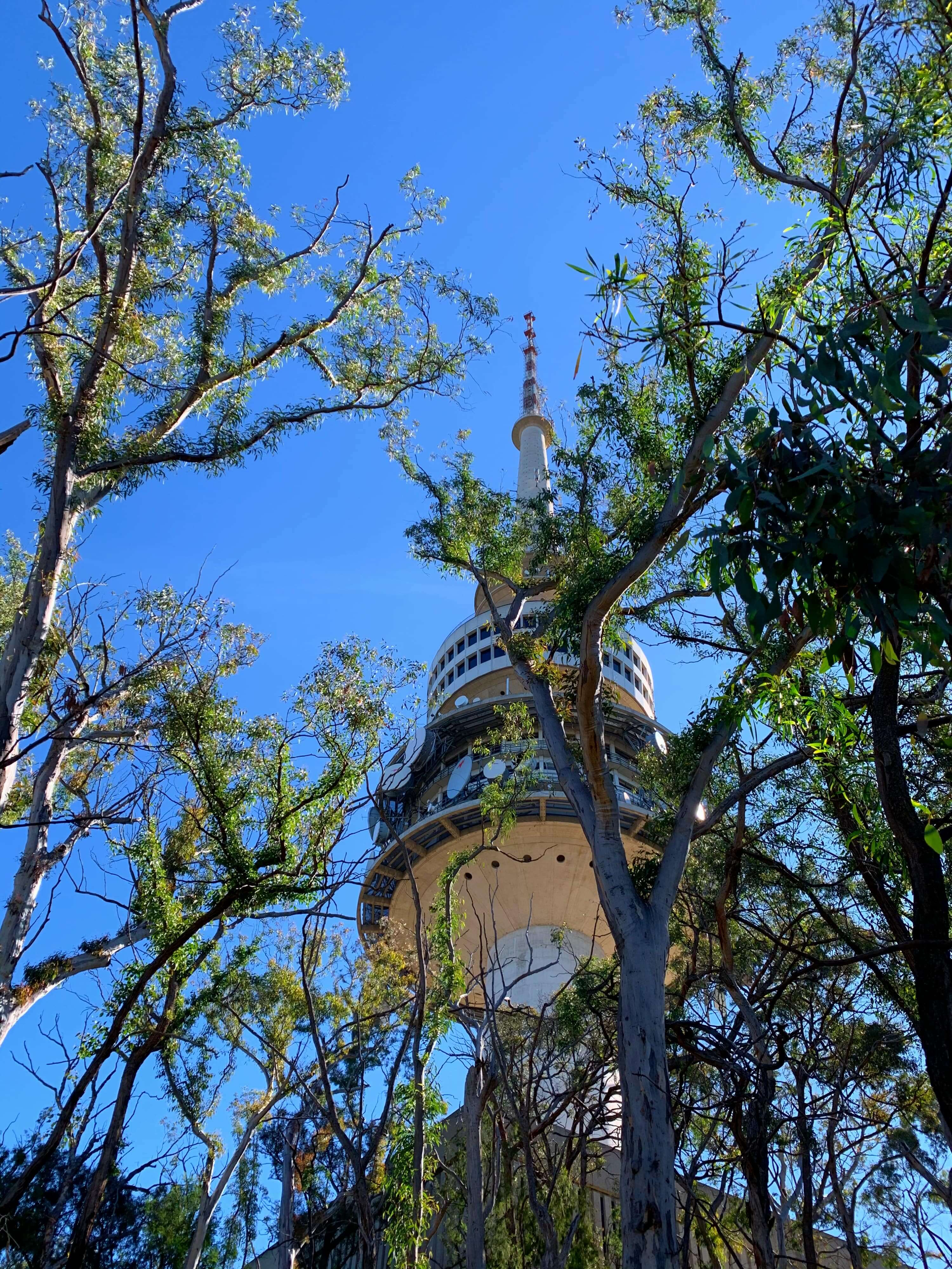 Canberra's iconic Telstra Tower, as seen from below, through a thin eucalypt tree grove
