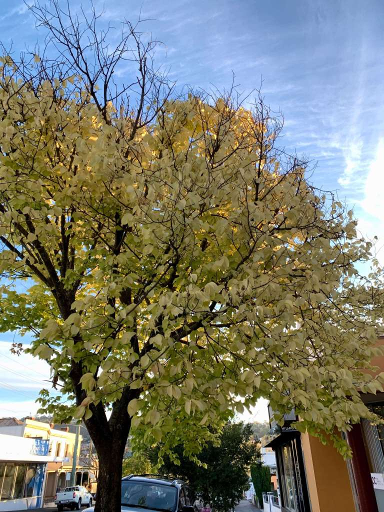 photo of a tree with bright yellow leaves