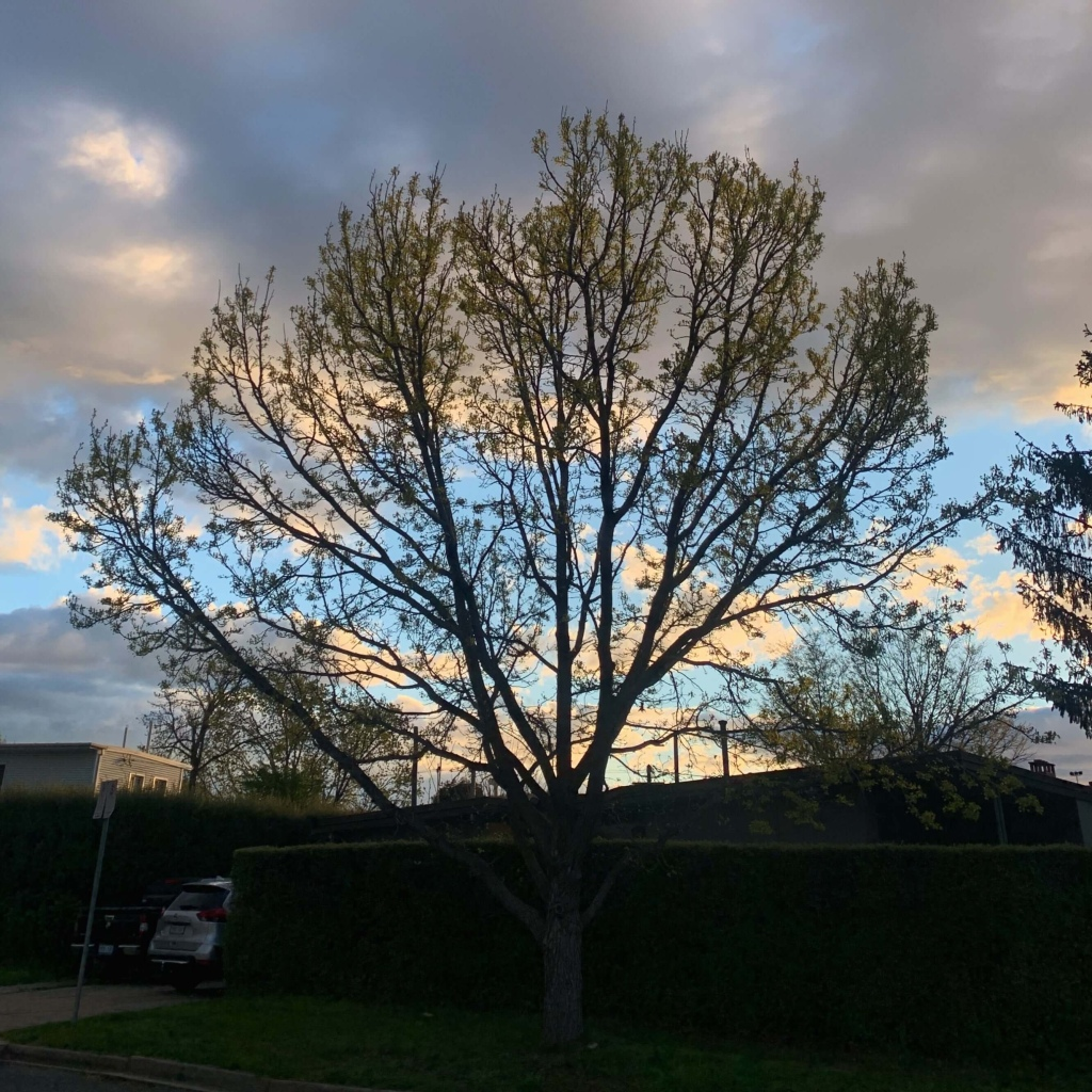 photo of a tree with new leaves sprouting