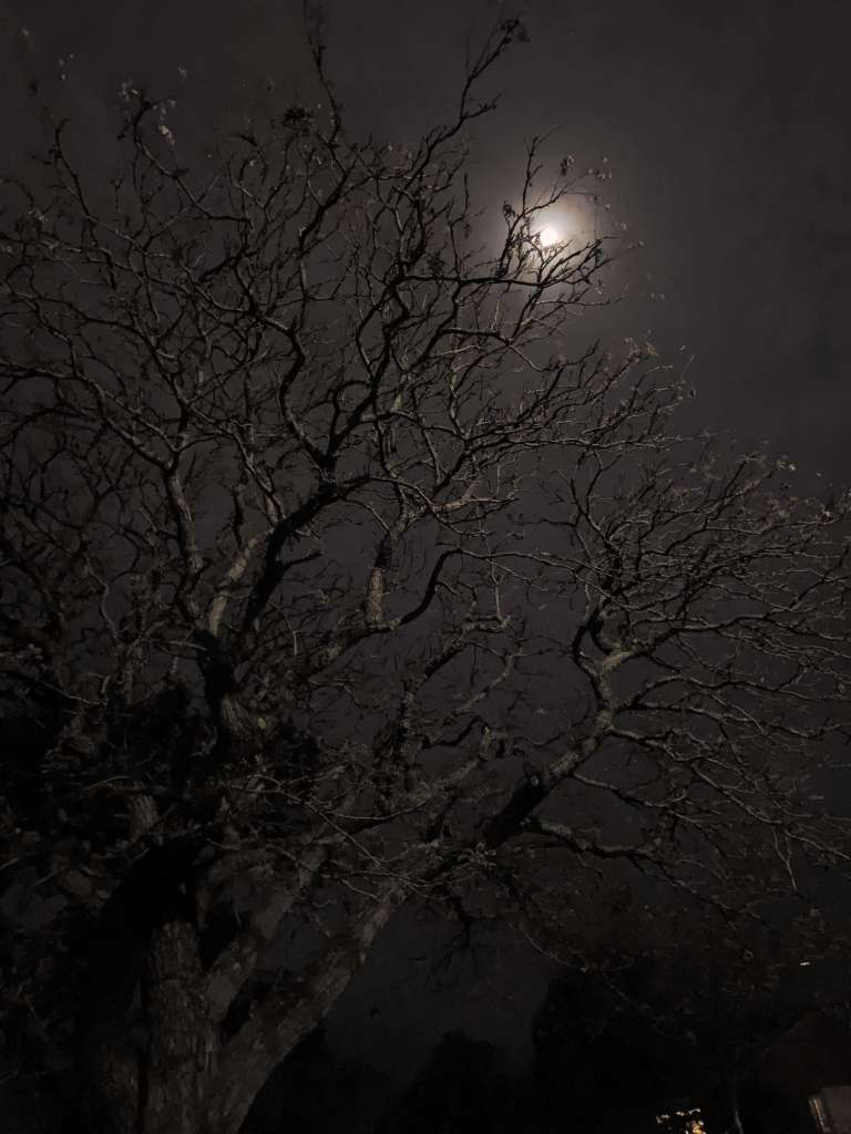 photo of an-almost full moon as seen through tree branches