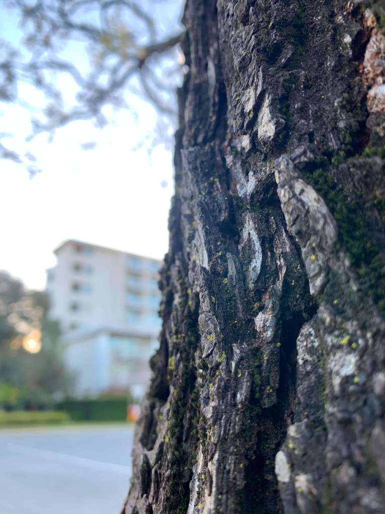 close up photo of a tree bark with an apartment building in the background