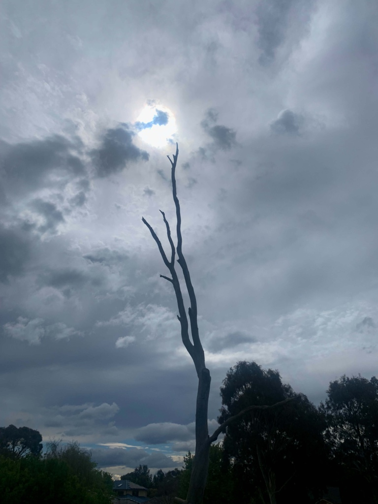 Image of a tall tree stump with its tip directly blow the sunlight in a cloudy day.