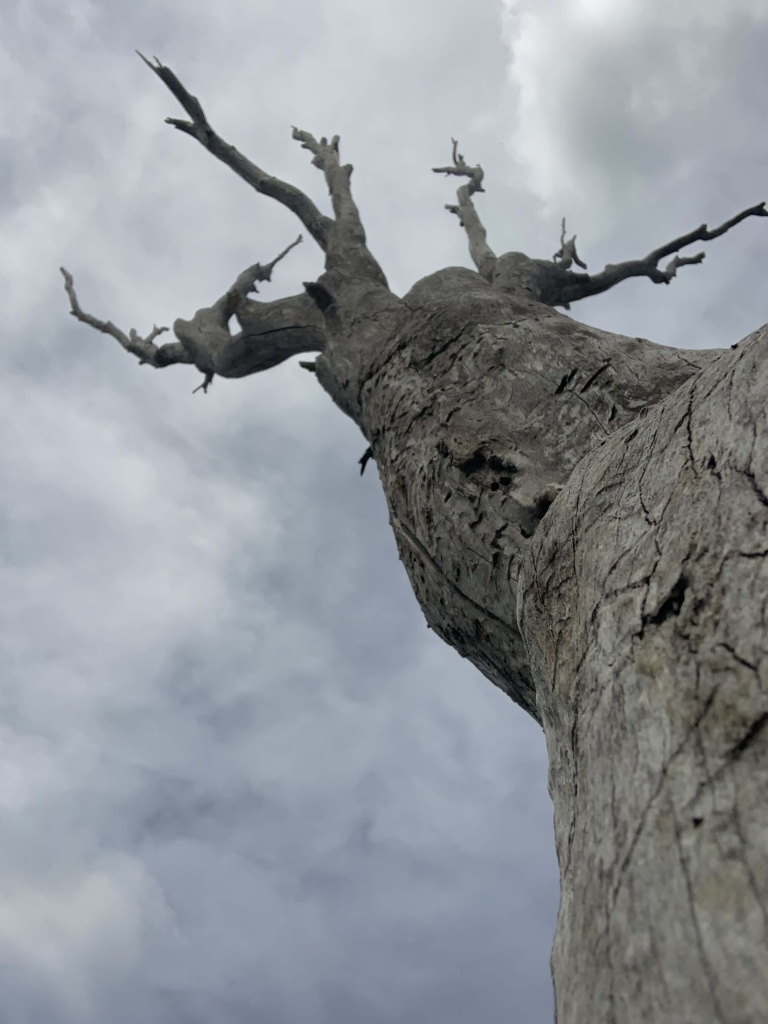 Close up photo of a tree stump from below.